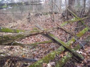 The old, worn-down wooden gate covering the 'water gap' where the old creek bed enters the farm from the back.