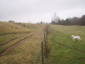 The other farming -- Pleasant, meandering cow paths on our side of the fence; rigid, imposing tire-tracks on the other.