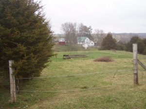 View of the homestead, overlooking the fledgling orchard.